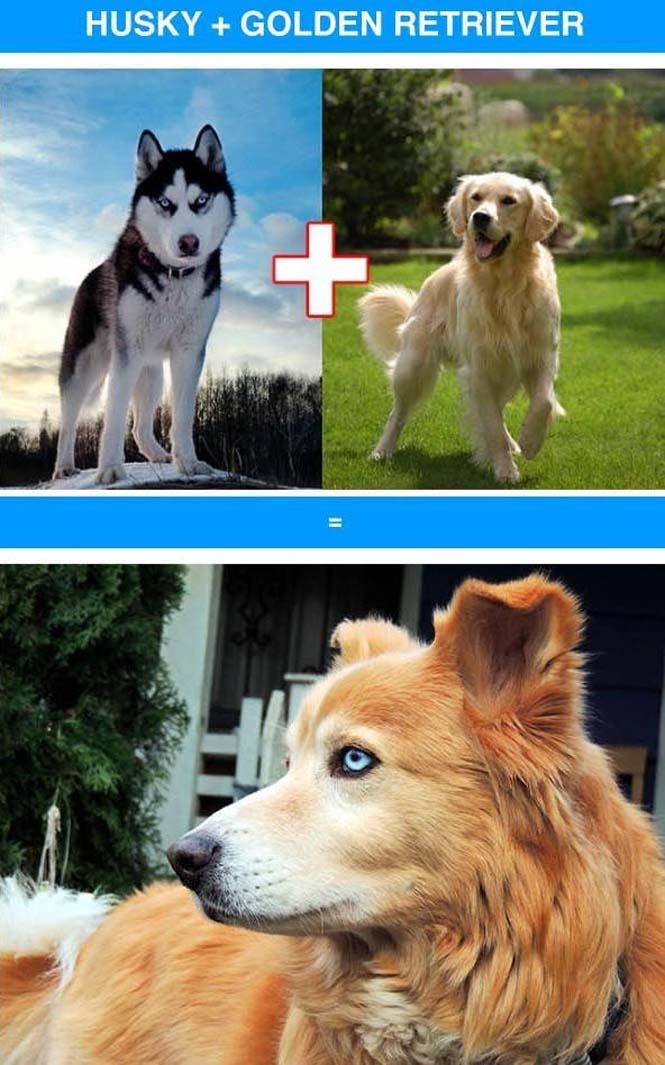 Ασυνήθιστες διασταυρώσεις σκύλων (1)