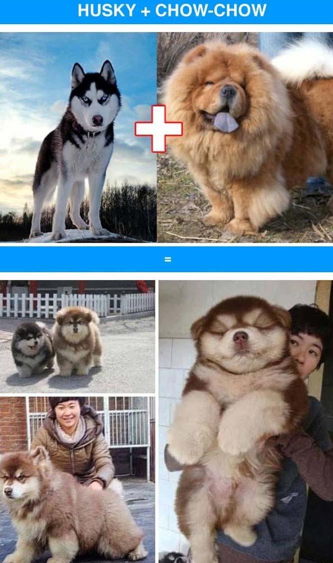 Ασυνήθιστες διασταυρώσεις σκύλων (2)