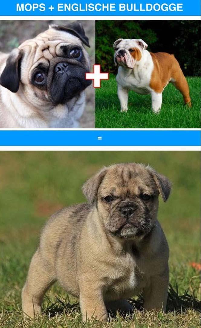 Ασυνήθιστες διασταυρώσεις σκύλων (3)