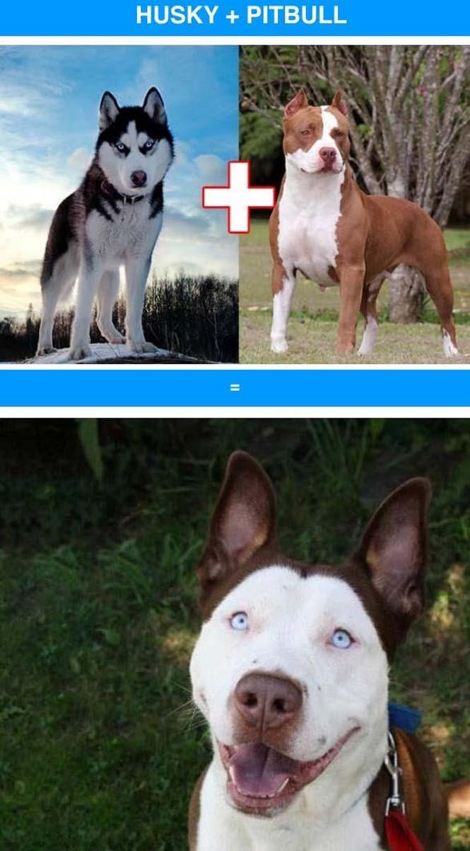 Ασυνήθιστες διασταυρώσεις σκύλων (4)