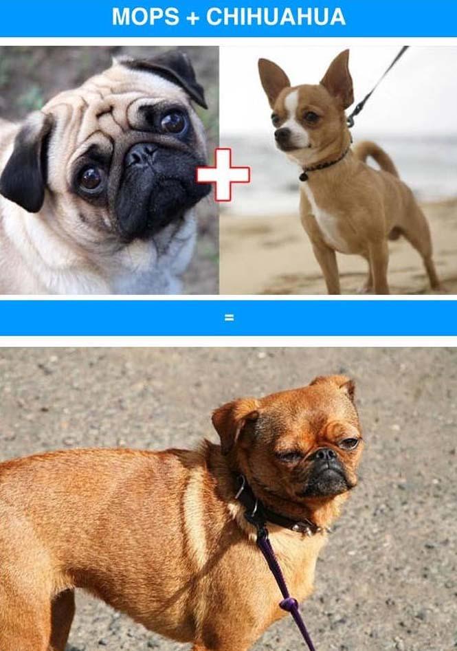 Ασυνήθιστες διασταυρώσεις σκύλων (6)