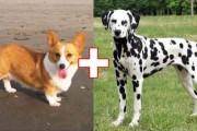 Ασυνήθιστες διασταυρώσεις σκύλων