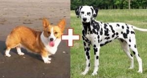Αυτά είναι τα αποτελέσματα 10 ασυνήθιστων διασταυρώσεων σκύλων