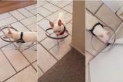 Εφεύρεση για να μην χτυπάει τυφλός σκύλος