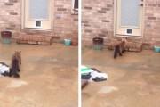 Γάτα ξαφνιάζει τον ιδιοκτήτη της με την αντίδραση στο νέο πορτάκι γάτας