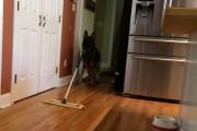 Ο Γερμανικός Ποιμενικός που βοηθάει στις δουλειές του σπιτιού
