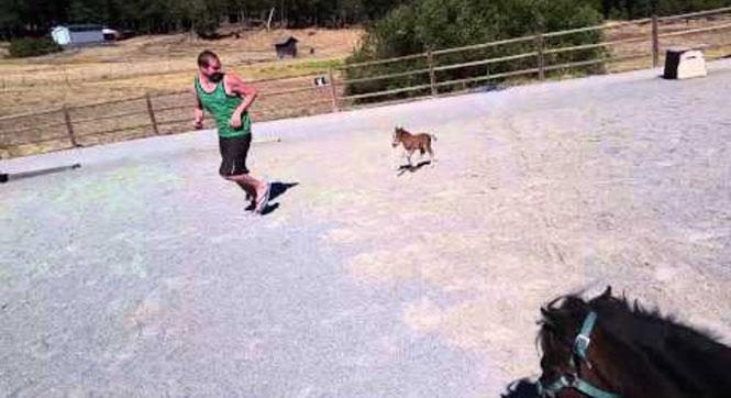 Μικροσκοπικό αλογάκι μινιατούρα τρέλανε το Internet