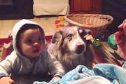 Όταν το μωρό δεν λέει μαμά αναλαμβάνει ο σκύλος