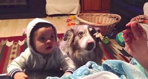 Όταν το μωρό δεν λέει μαμά αναλαμβάνει ο σκύλος (Video)