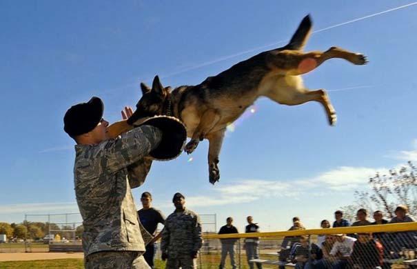 Στρατιωτικές φωτογραφίες που τραβήχτηκαν την κατάλληλη στιγμή (10)