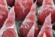 Το ανθρώπινο σώμα στο μικροσκόπιο (2)