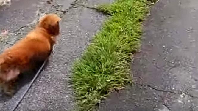Δείτε πως αντιδρά αυτός ο σκύλος όταν ο ιδιοκτήτης του κάνει πως πέφτει κάτω