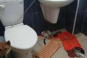 Αυτά παθαίνεις όταν κλειδώνεις έναν σκύλο στο μπάνιο (1)