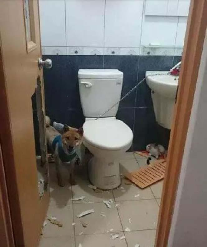 Αυτά παθαίνεις όταν κλειδώνεις έναν σκύλο στο μπάνιο (2)