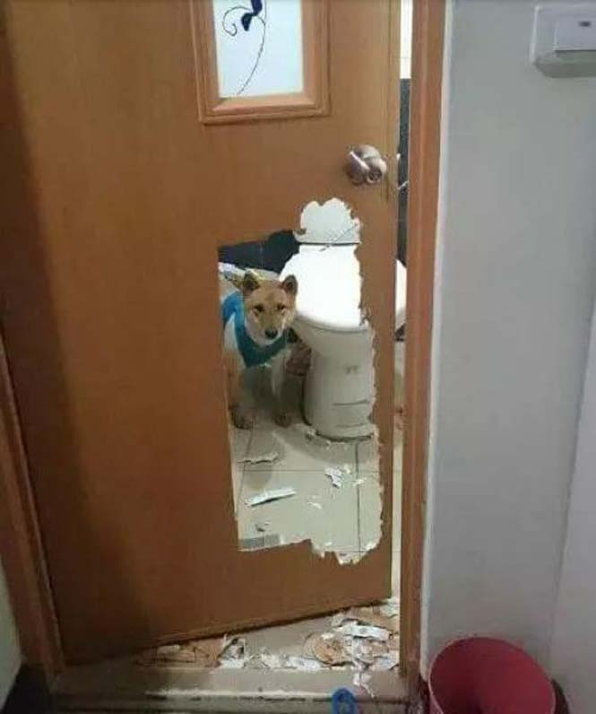 Αυτά παθαίνεις όταν κλειδώνεις έναν σκύλο στο μπάνιο (3)