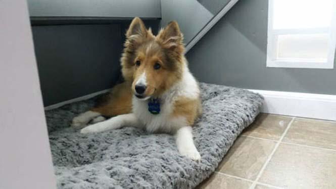 Δημιουργικός ιδιοκτήτης κατοικιδίου έφτιαξε το τέλειο σκυλόσπιτο (10)