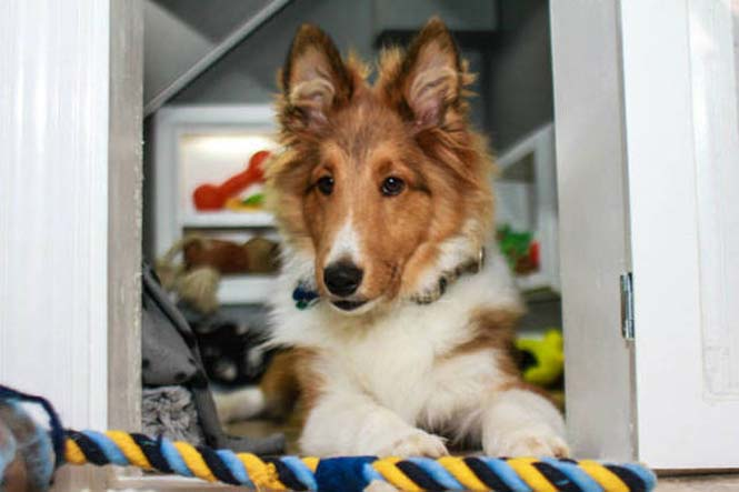 Δημιουργικός ιδιοκτήτης κατοικιδίου έφτιαξε το τέλειο σκυλόσπιτο (11)