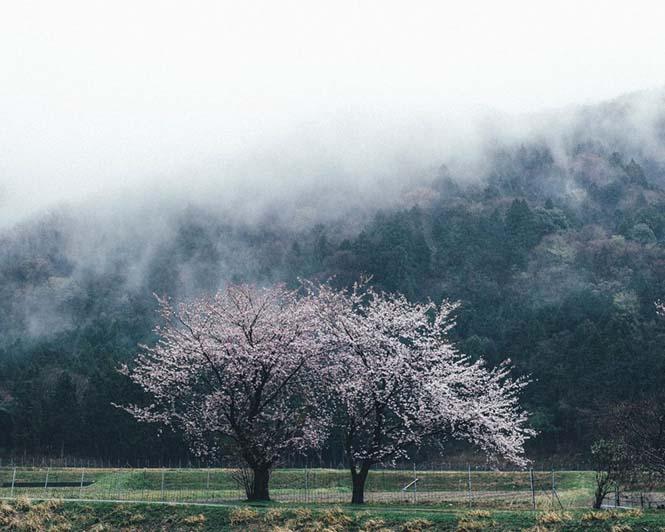 Φωτογράφος απαθανάτισε την εντυπωσιακή ομορφιά της καθημερινής ζωής στην Ιαπωνία (3)