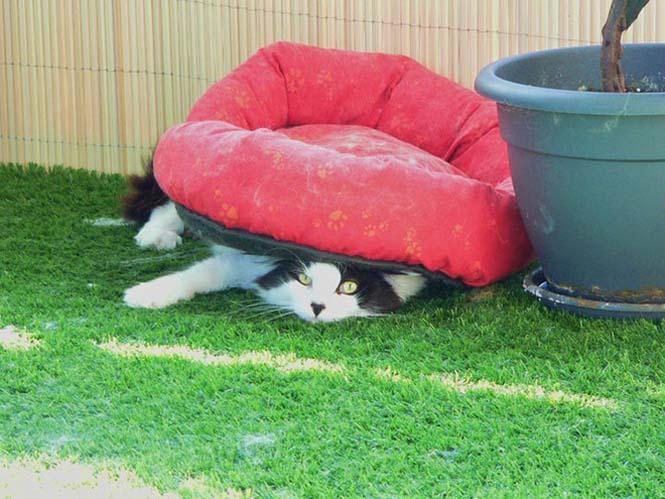Γάτες είναι, ότι θέλουν κάνουν (1)