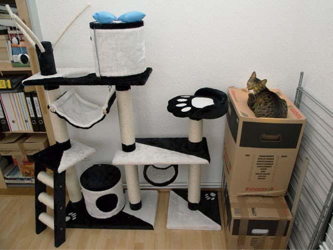 Γάτες είναι, ότι θέλουν κάνουν (2)
