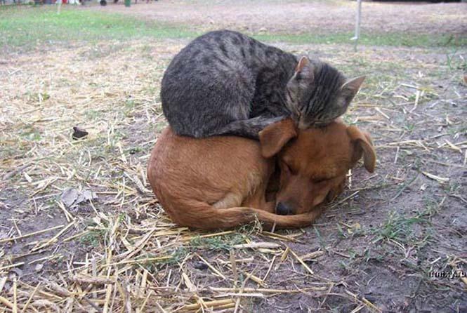 Γάτες είναι, ότι θέλουν κάνουν (6)