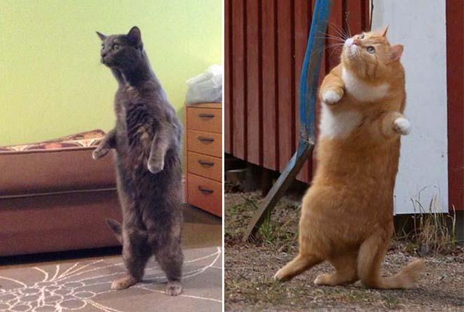 Γάτες είναι, ότι θέλουν κάνουν (10)