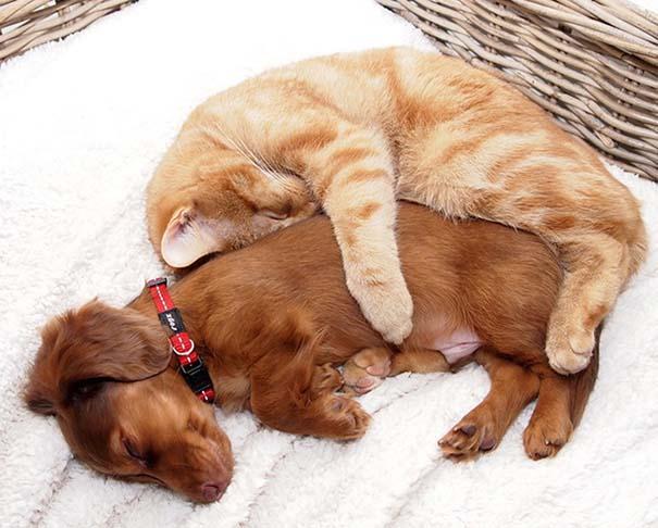 Γάτες και σκύλοι (4)