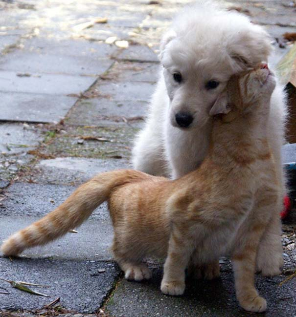 Γάτες και σκύλοι (7)