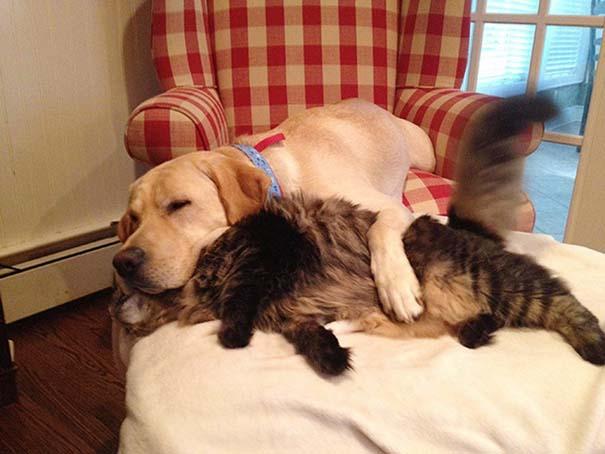 Γάτες και σκύλοι (9)