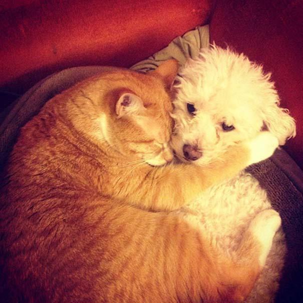 Γάτες και σκύλοι (11)