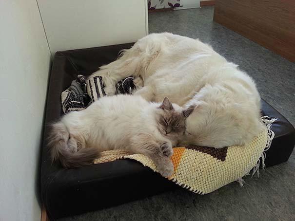 Γάτες και σκύλοι (12)