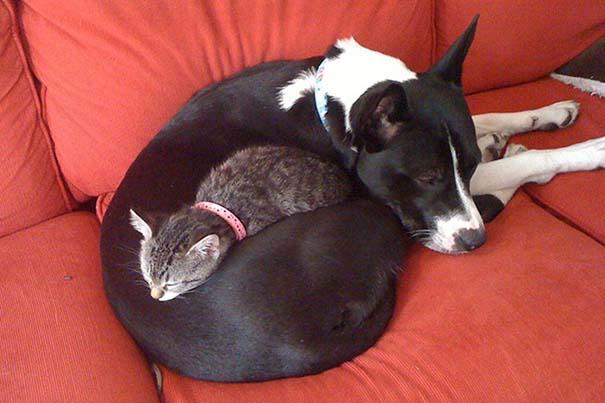 Γάτες και σκύλοι (13)