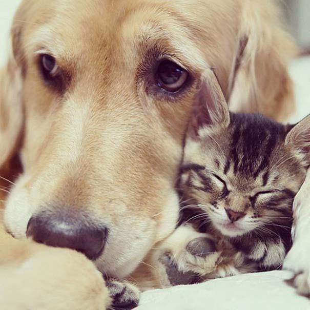 Γάτες και σκύλοι (15)