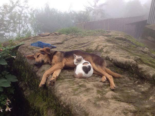 Γάτες και σκύλοι (16)