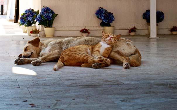 Γάτες και σκύλοι (17)