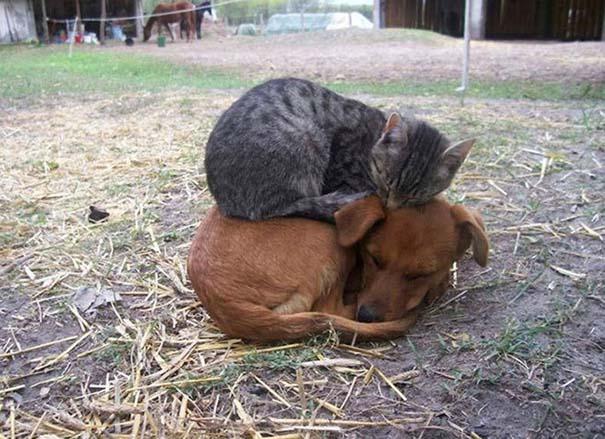 Γάτες και σκύλοι (18)