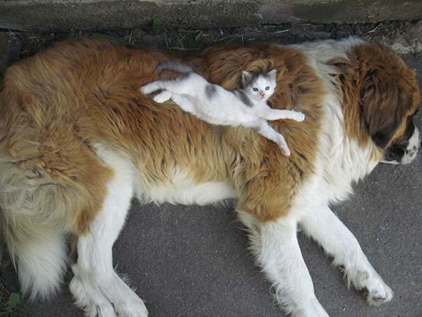 Γάτες και σκύλοι (19)