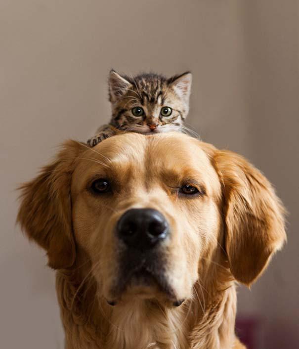 Γάτες και σκύλοι (21)