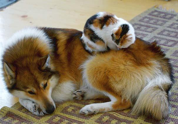 Γάτες και σκύλοι (22)
