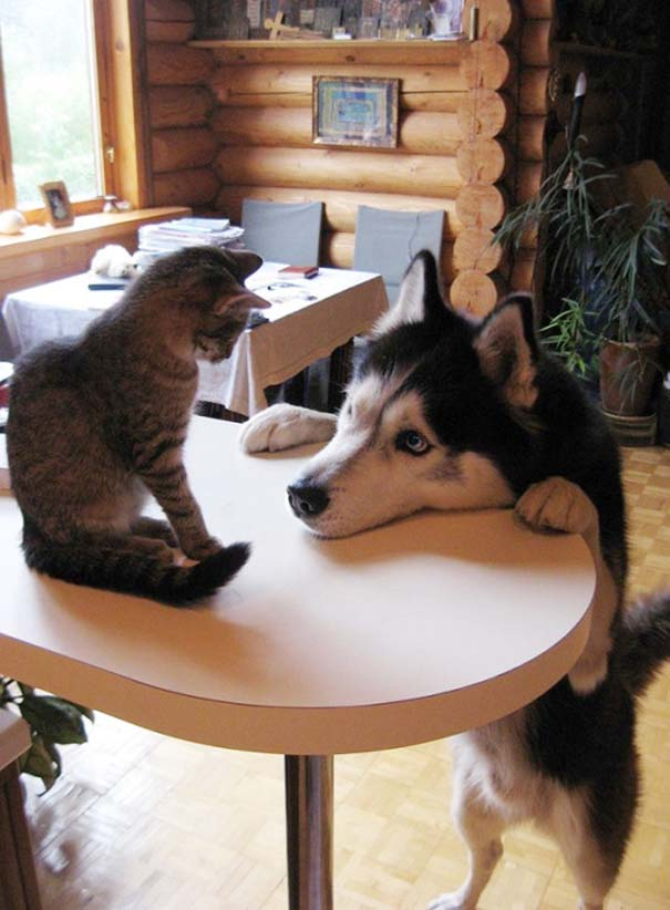 Γάτες και σκύλοι (24)