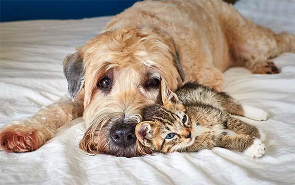Γάτες και σκύλοι (26)