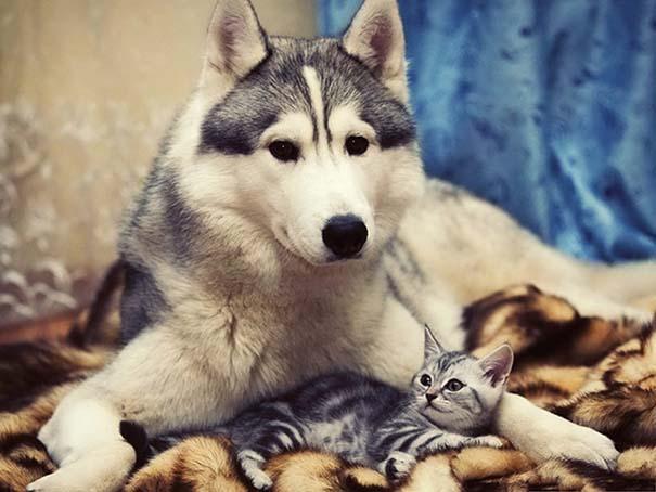 Γάτες και σκύλοι (27)