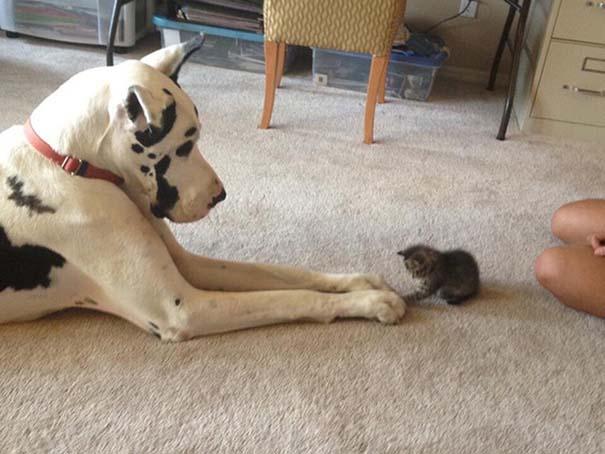 Γάτες και σκύλοι (29)