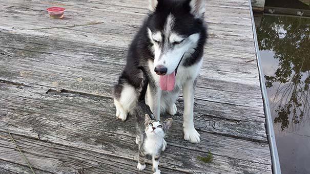 Γάτες και σκύλοι (30)