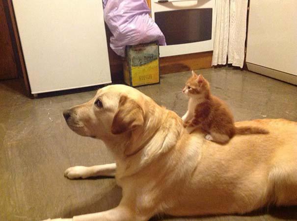 Γάτες και σκύλοι (31)