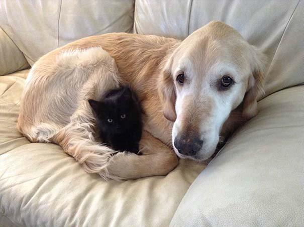 Γάτες και σκύλοι (32)