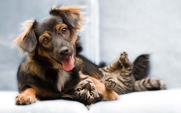 Γάτες και σκύλοι (33)