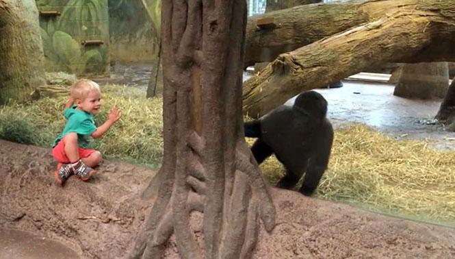 Γορίλας παίζει κρυφτό με ένα παιδάκι