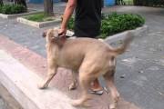 Μαμά γάτα τα βάζει με τεράστιο σκύλο για να προστατέψει το μικρό της