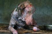 Μεταμόρφωση ετοιμοθάνατου σκύλου